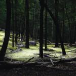 """""""Den här bilden ingår i en konstfoto-serie som jag kallar """"Enlightenment"""". Jag försöker skapa rum i naturen med hjälp av ljus. Jag tar först en bild av motivet i mörker och sedan lyser jag upp olika delar av det uppifrån och tar nya bilder. Totalt är det 50-100 exponeringar som jag sedan lägger ihop"""""""
