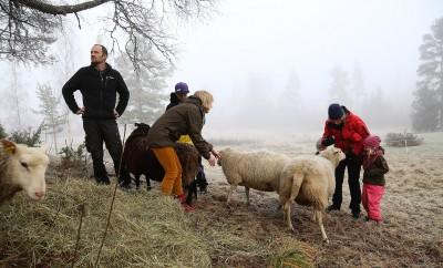 Familjen Zetterlund är ute i fårhagen och ser till sina får. Från vänster: Pappa David, Jonathan och mamma Anna. Minstingarna Nisse och Anna-Klara står tryggt bredvid farmor Ulla Bylund.