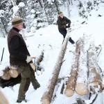 100 stormfällda träd ska sågas till timmer eller skickas iväg som massaved.