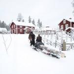 Olle Parkman och Skare på väg upp till gårdsplanen på gården i Stigsjö.