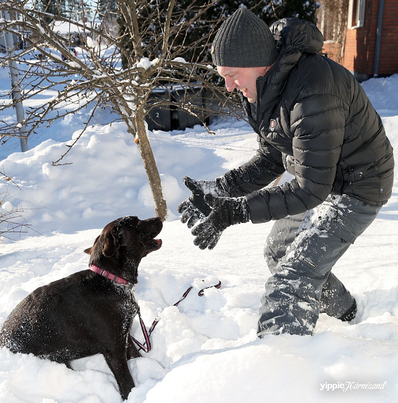 Labradoren Wilma & husse Patrik Andersson
