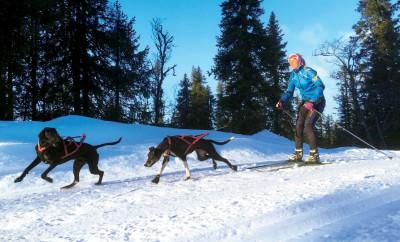 """Marie Molander och hundarna Norma (med vita frambenen) och Iso har spenderat mycket tid i Vemdalen. """"Jag tackar vädergudarna för att snön kom tidigt där i år"""". Foto: Andreas Einarsson"""