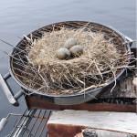 Än går det inte att grilla. Först  måste äggen kläckas.