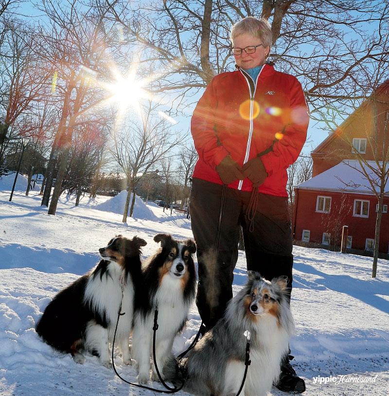 Shetland Sheepdog: Norton, Timmi och Ruff & Catharina Elmroth
