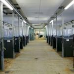 I stallet finns plats för upp till trettio hästar.
