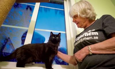 Skeppskatten Bamsi, som är en av katterna som ska få ett nytt hem, pysslas om av Christina Nordlund, en av eldsjälarna på Öbacka Djurhem.