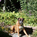 Jasper har det gott i trädgården.