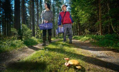 Skogsfynd med Härnösands Svampklubb