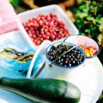 Bär, grönsaker och frukt bjuds det på i trädgården.