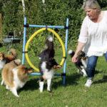 Både matte och hundar får motion i agilitybanan.