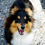 Livet som hund är oftast glädjefyllt.